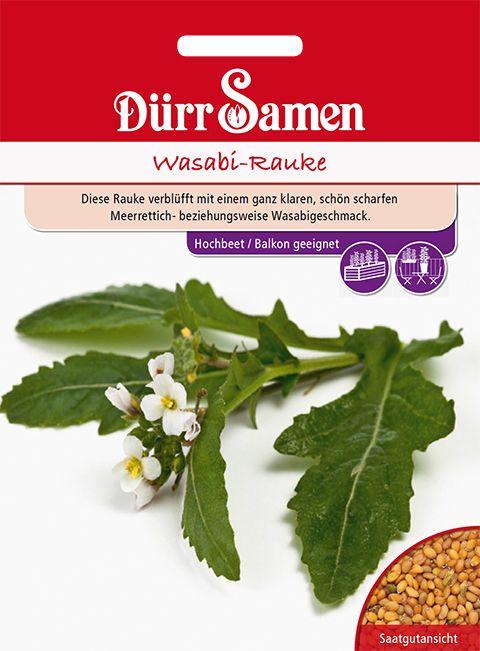 Dürr Samen Wasabi-Rauke