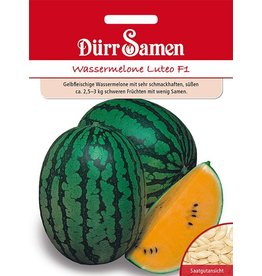 Dürr Samen Orangefleischige Wassermelonen Champagne F1