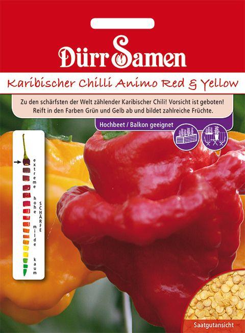 Dürr Samen Karibischer Chilli Animo Red und Yellow