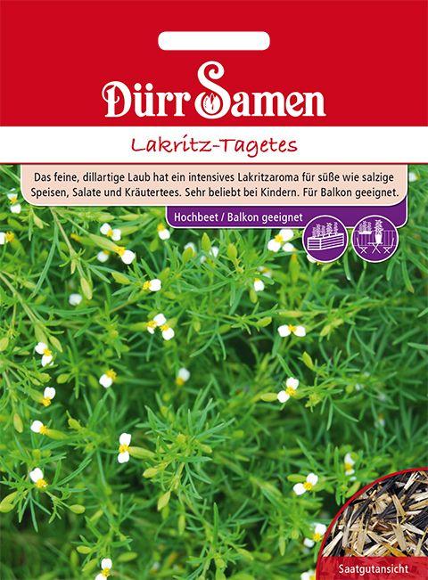 Dürr Samen Lakritz-Tagetes