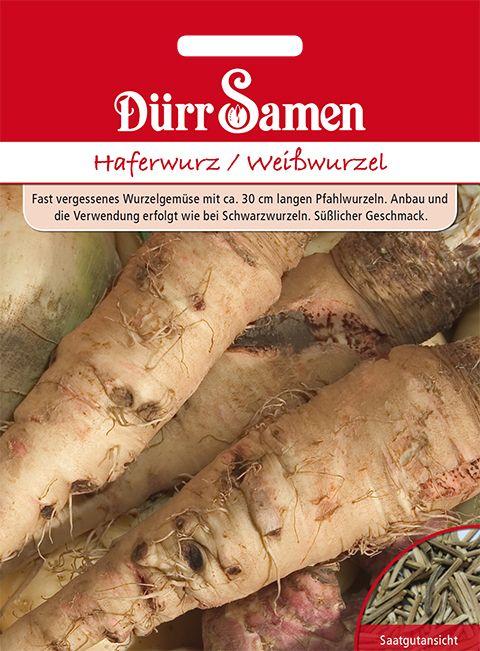 Dürr Samen Haferwurz/ Weißwurzel