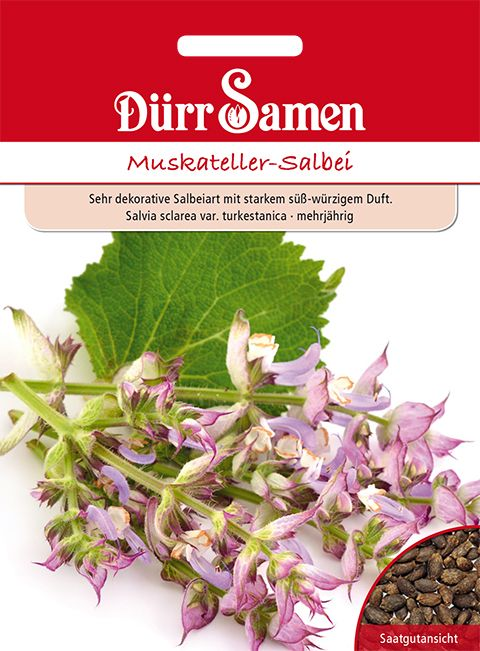 Dürr Samen Muskateller-Salbei