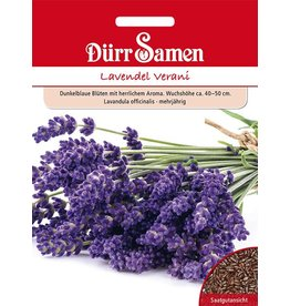 Dürr Samen Lavendel Verani