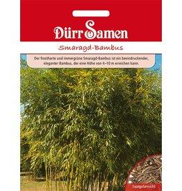 Dürr Samen Smaragd-Bambus