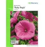 Benary Bechermalve Ruby Regis, einjährig