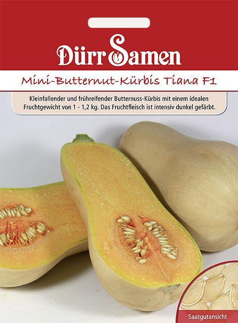 Dürr Samen Mini-Butternut-Kürbis Tiana F1