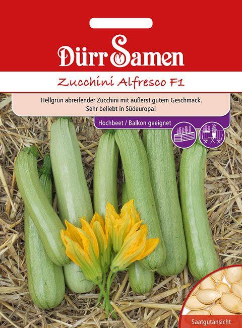 Dürr Samen Zucchini Alfresco F1