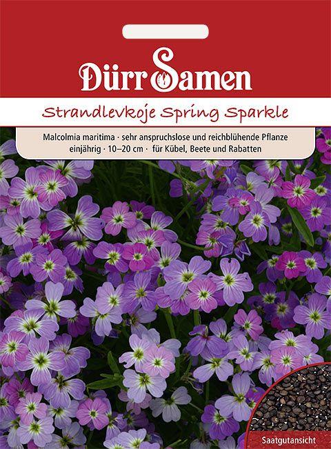 Dürr Samen Strandlevkoje 'Spring Sparkle', einjährig, 10-20cm