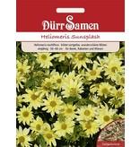 Dürr Samen Sonnenblume Heliomeris 'Sunsplash', einjährig, 50-60cm