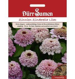 Dürr Samen Zinnien 'Zinderella Lilac', einjährig, 70cm