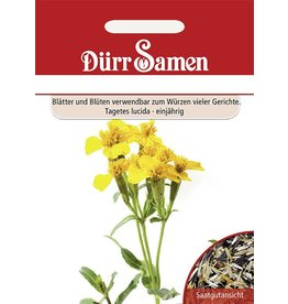 Dürr Samen Würz-Tagetes
