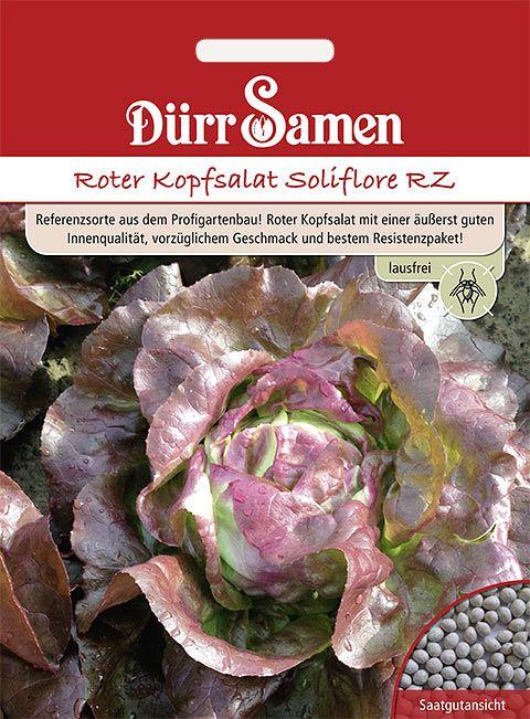 Dürr Samen Roter Kopfsalat Soliflore RZ