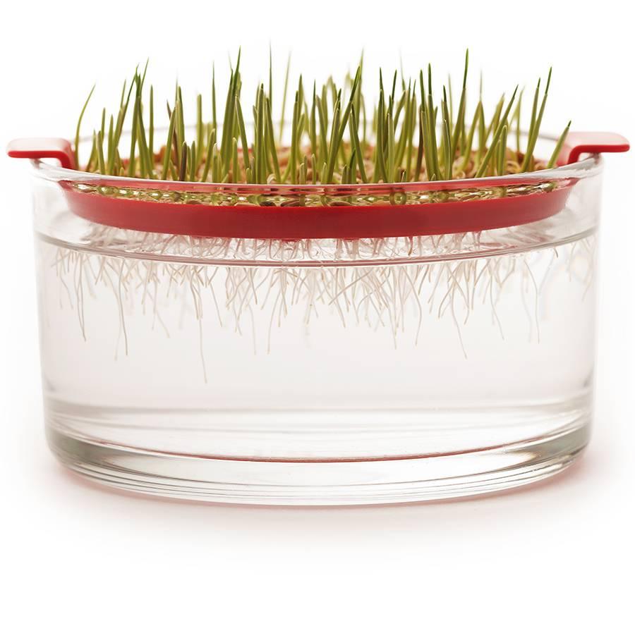 Dürr Samen Keimschale für Keimsprossen