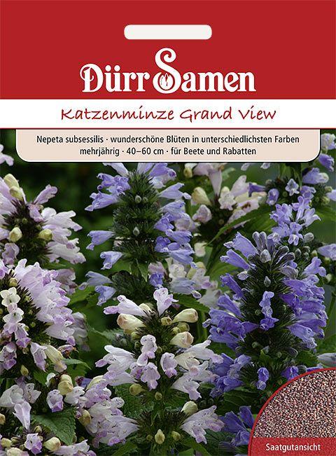 Dürr Samen Katzenminze 'Grand View', mehrjährig, 40-60cm