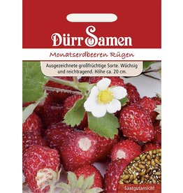 Dürr Samen Monatserdbeeren Rügen