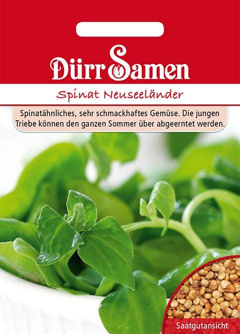 Dürr Samen Spinat Neuseeländer