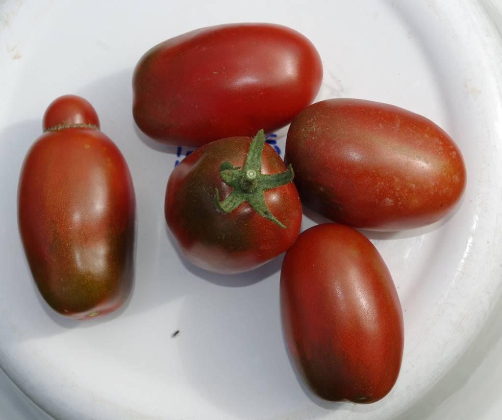 Saat & Gut BIO-Salattomate Black Plum