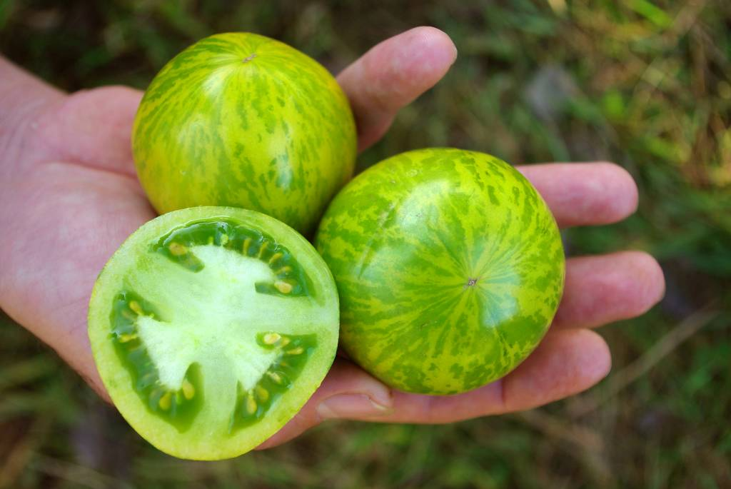 Saat & Gut BIO-Salattomate Green Zebra