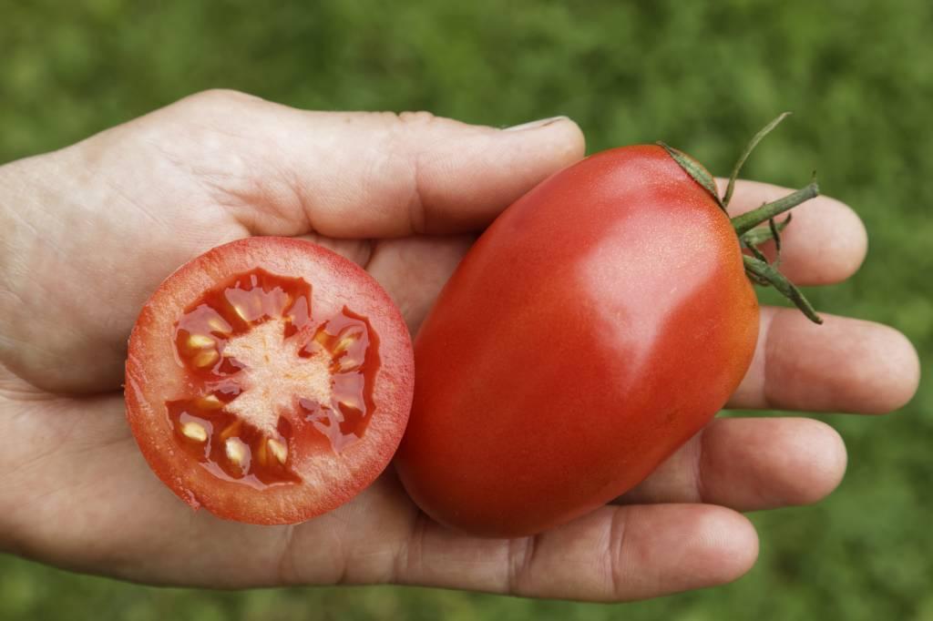 Saat & Gut BIO-Salattomate Rote Zora