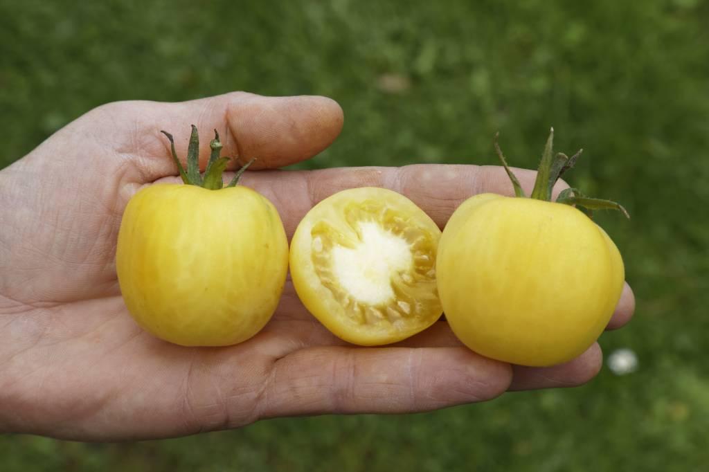 Saat & Gut BIO-Salattomate Weißer Pfirsich