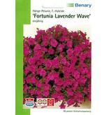Benary Petunie WonderWave® F1 Lavender, einjährig