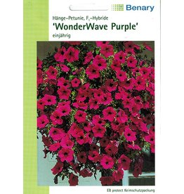 Benary Petunie WonderWave® F1Purple, einjährig