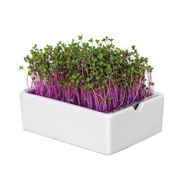 Heimgart Anzuchtschale Starter Kit für Microgreens