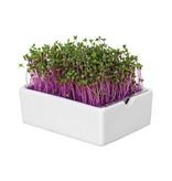 Heimgart BIO-Rotkohl Microgreen Saatpads - 6er Set