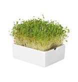Heimgart BIO-Senf Microgreen Saatpad
