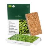 Heimgart BIO-Senf Microgreen Saatpads - 6er Set