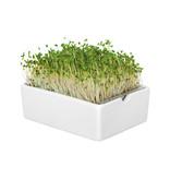 Heimgart BIO-Brokkoli Microgreen Saatpad