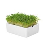 Heimgart BIO-Rauke Microgreen Saatpads - 6er Set