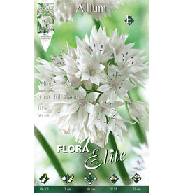 Allium Gracefull Beauty® (Zierlauch)