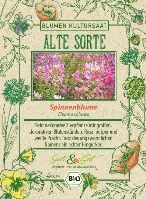 Saat & Gut BIO-Spinnenblume