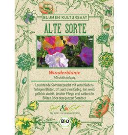 Saat & Gut BIO-Wunderblume