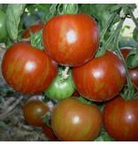 Saat & Gut BIO-Tomate rotgelb gestreifte runde