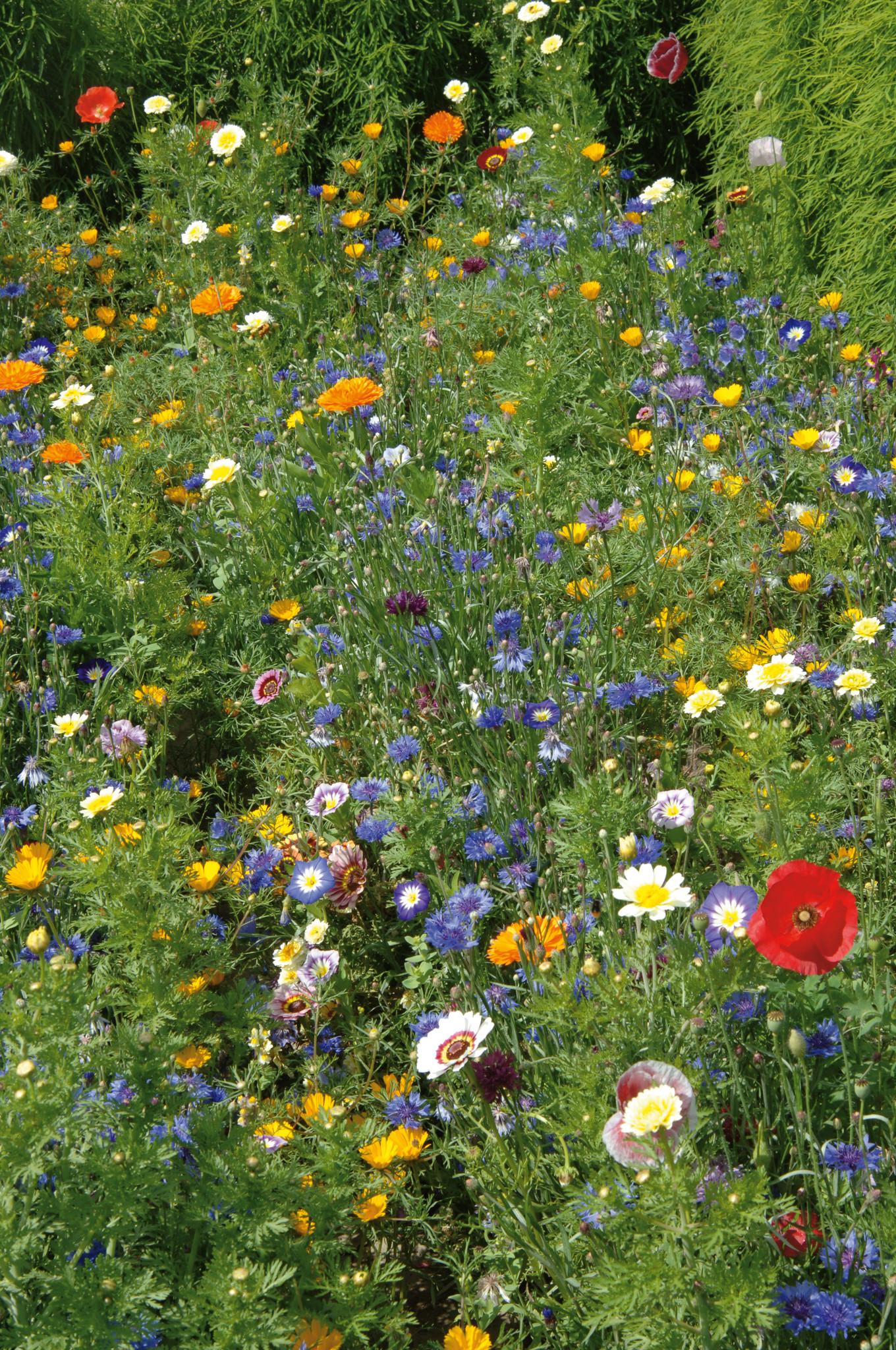 Saat & Gut BIO-Schattenblumen Mischung