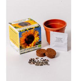 Saat & Gut Anzuchtset - BIO Sonnenblume