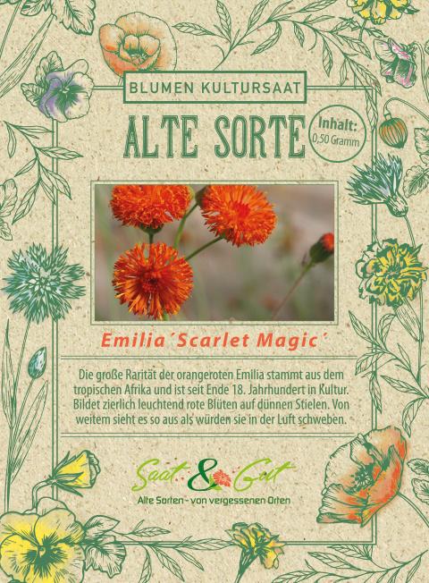 Saat & Gut BIO-Quastenblume Emilia 'Scarlet Magic'