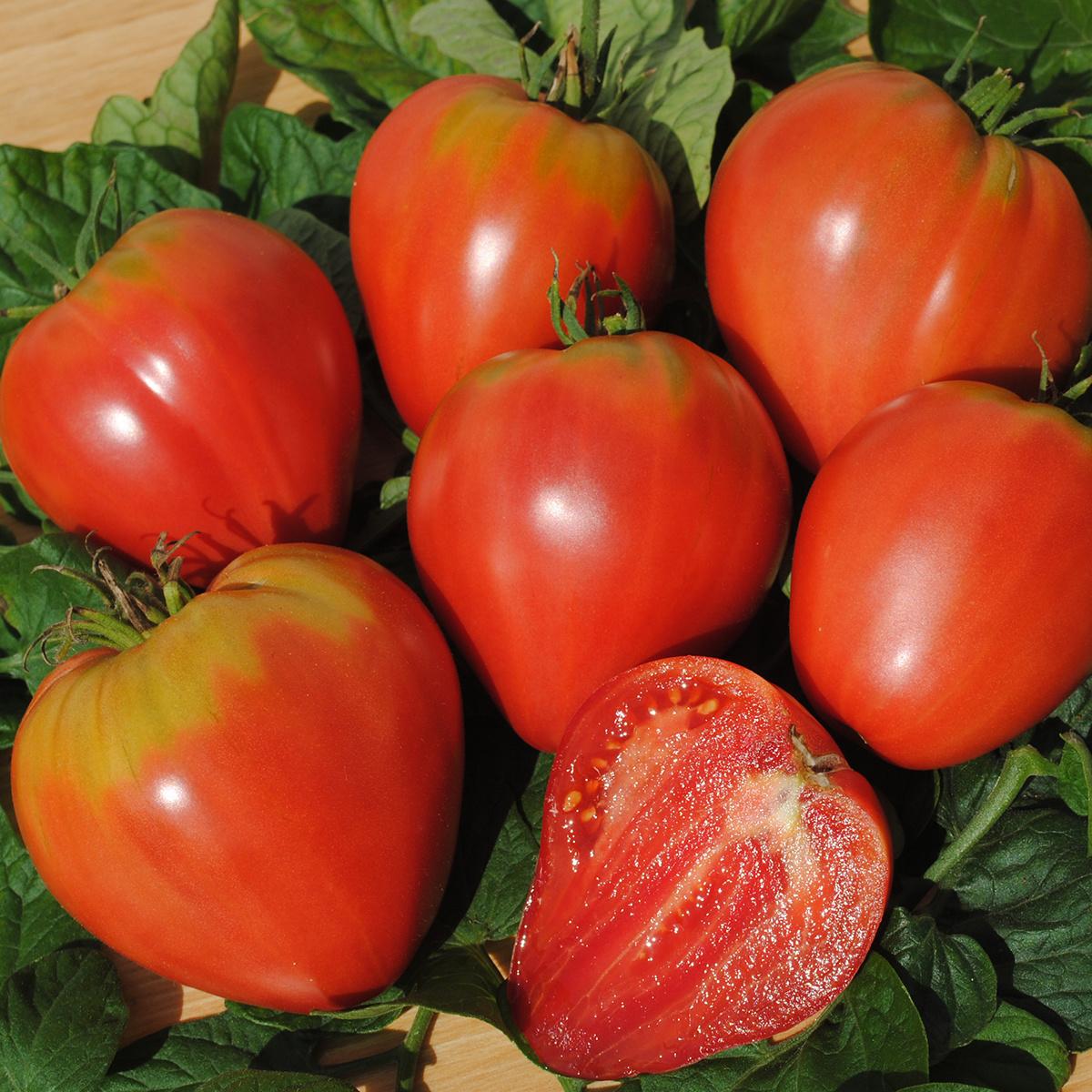 Saat & Gut BIO-Tomate Ochsenherz