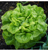Saat & Gut BIO-Salat Augspurger