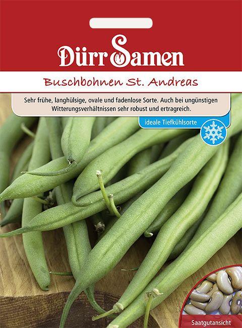 Dürr Samen Buschbohnen  St. Andreas