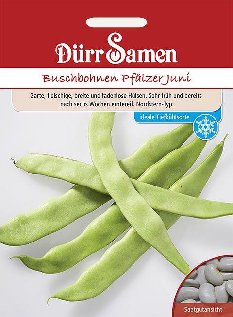 Dürr Samen Buschbohnen  Pfälzer Juni