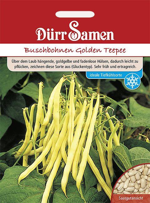 Dürr Samen Buschbohnen  Golden Teepee