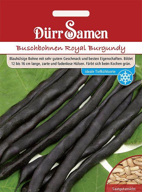 Dürr Samen Buschbohnen  Royal Burgundy blau