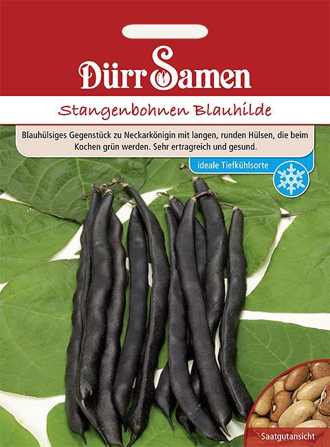Dürr Samen Stangenbohnen  Blauhilde