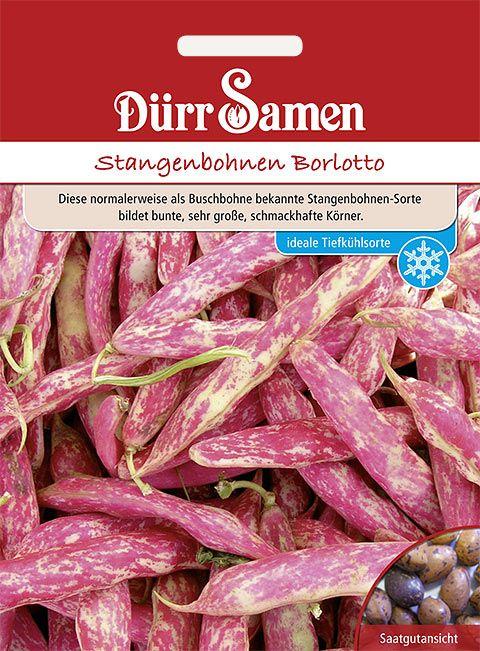 Dürr Samen Stangenbohnen  Borlotto-Typ
