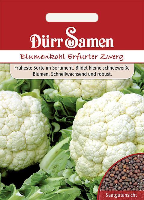 Dürr Samen Blumenkohl  Erfurter Zwerg