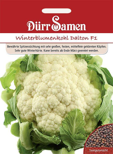 Dürr Samen Blumenkohl  Dalton F1