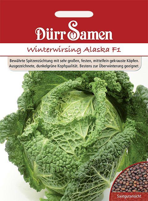Dürr Samen Wirsing  Alaska F1